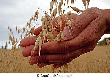 grain, tenue, paysan