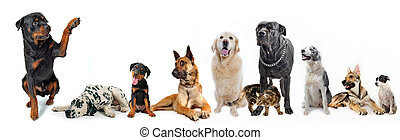 groupe, chat, chiens