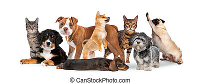groupe, huit, chats, chiens