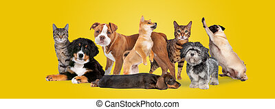 groupe, huit, chiens, chats
