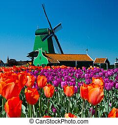 hollande, éolienne