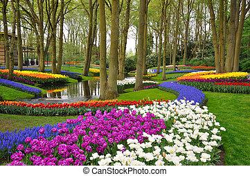 hollande, coloré, tulipes, parc, fleurir, keukenhof