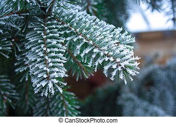 impeccable, couvert, ice., grand plan, sapin, branche, arbre