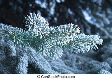 impeccable, ice., couvert haut, arbre, fin, sapin, branche