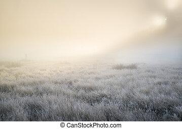lumière, soleil haut, automne, abrutissant, brouillard, par, rayons, automne, épais