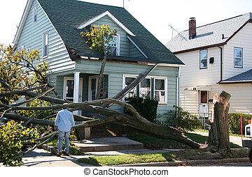 maison, endommagé, arbre