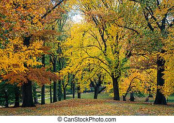 manhattan, york, automne, parc central, nouveau, couleur, ville
