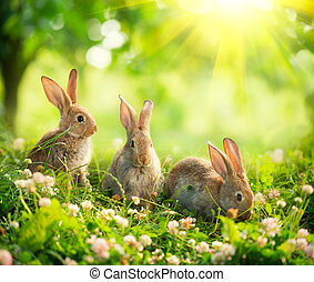 mignon, peu, lapins, art, pré, rabbits., conception, paques