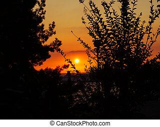 monture, arbres, branches, sur, soleil, mer, par, vue, bateau