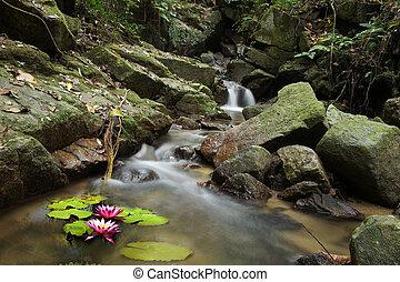 nénuphar, chute eau, forêt, petit