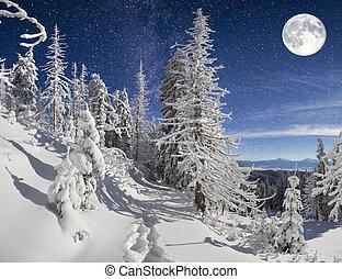 nuit, montagne, paysage hiver, forêt, beau