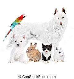 oiseau, chat, -, lapins, chiens, devant, blanc
