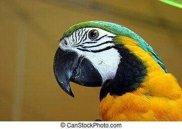 oiseaux, #1