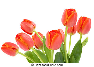 orange, tulipes