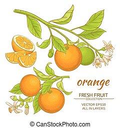 orange, vecteur, ensemble