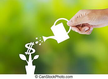 papier-monnaie, plante, arrosage