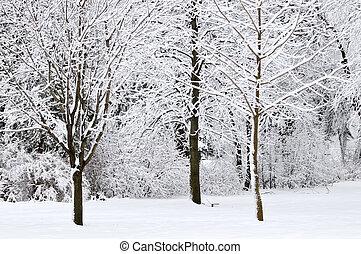 parc, paysage hiver