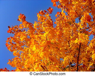 parc ville, arbres, automne, automne, érable