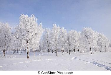 paysage, arbres, neige, hiver, couvert
