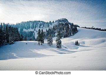 paysage hiver, forêt