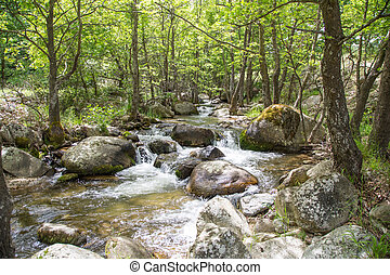 paysage rivière, arbres, nature