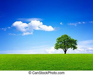 paysage vert, nature