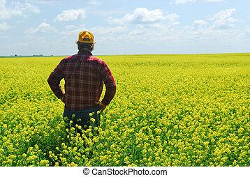 paysan, récolte, canola, inspection