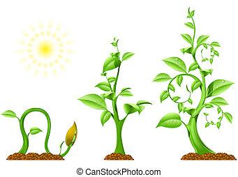 plante, croissance