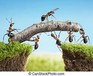 pont, collaboration, construire, fourmis, équipe