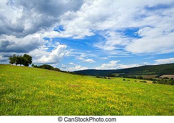 prés, été, fleurs jaunes