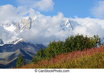 prés, montagne, alpin, svaneti, supérieur, paysage, zone