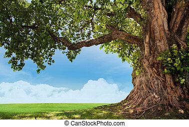 printemps, arbre, pré, grand