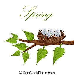 printemps, nid