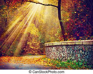 rayons, automnal, arbres, automne, fall., park., lumière soleil