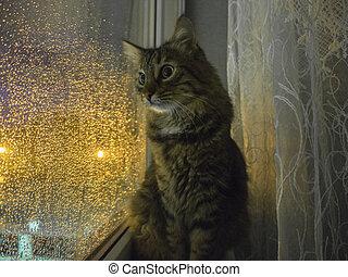 rebord fenêtre, regarde, fenêtre, soir, chat