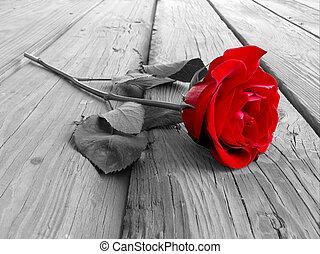 rose, bois, bw