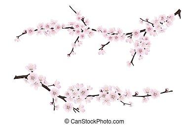 rose, branches, printemps, arbre, fleurir, fleurs