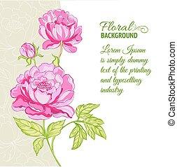 rose, pivoines, échantillon, fond, texte