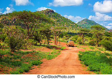 route, afrique, ouest, buisson, savanna., terrestre, tsavo, kenya, rouges