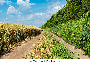 rural, chemin terre, champs
