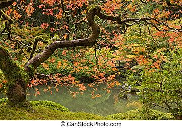 saison, automne, 2, japonais jardin