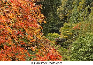 saison, automne, jardin japonais