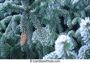 sapin, haut, couvert, fin, arbre, impeccable, branche, ice.