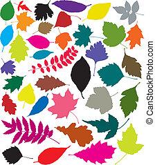 silhouettes, feuilles, coloré