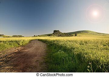 sud, ville, canola, terre, ferme, champs, mouillé, route, courant, par, occidental, afrique., cap, cap