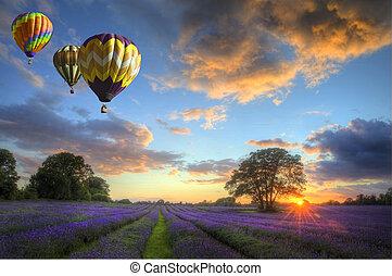sur, voler, lavande, air, chaud, coucher soleil, ballons, paysage