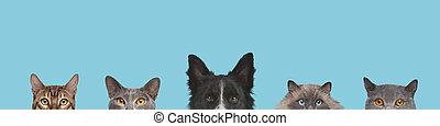 tête, chien, tondu, têtes, chats, vue