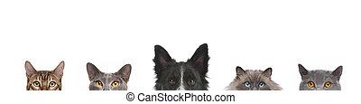 têtes, tête taillée, chats, vue, chien