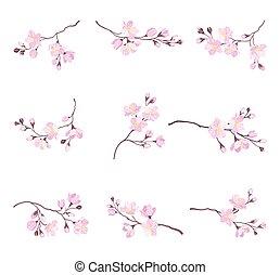 tendre, rose, vecteur, ensemble, cerise, fleur, fleurir, branches, fleurs