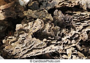 termites., nid